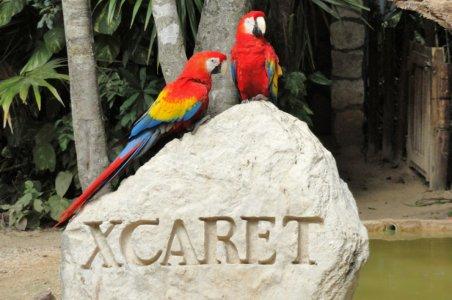 Природный парк Шкарет