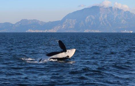 Тарифа: легенды, пролив и дельфины