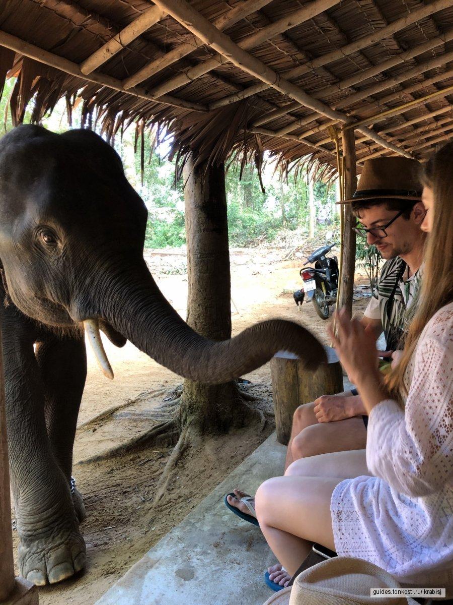 Слоновья ферма
