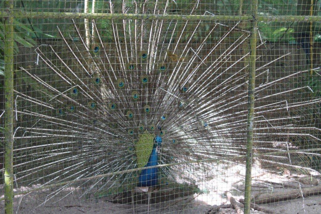 Зоопарк на Пхукете. Сезон 2019-2020
