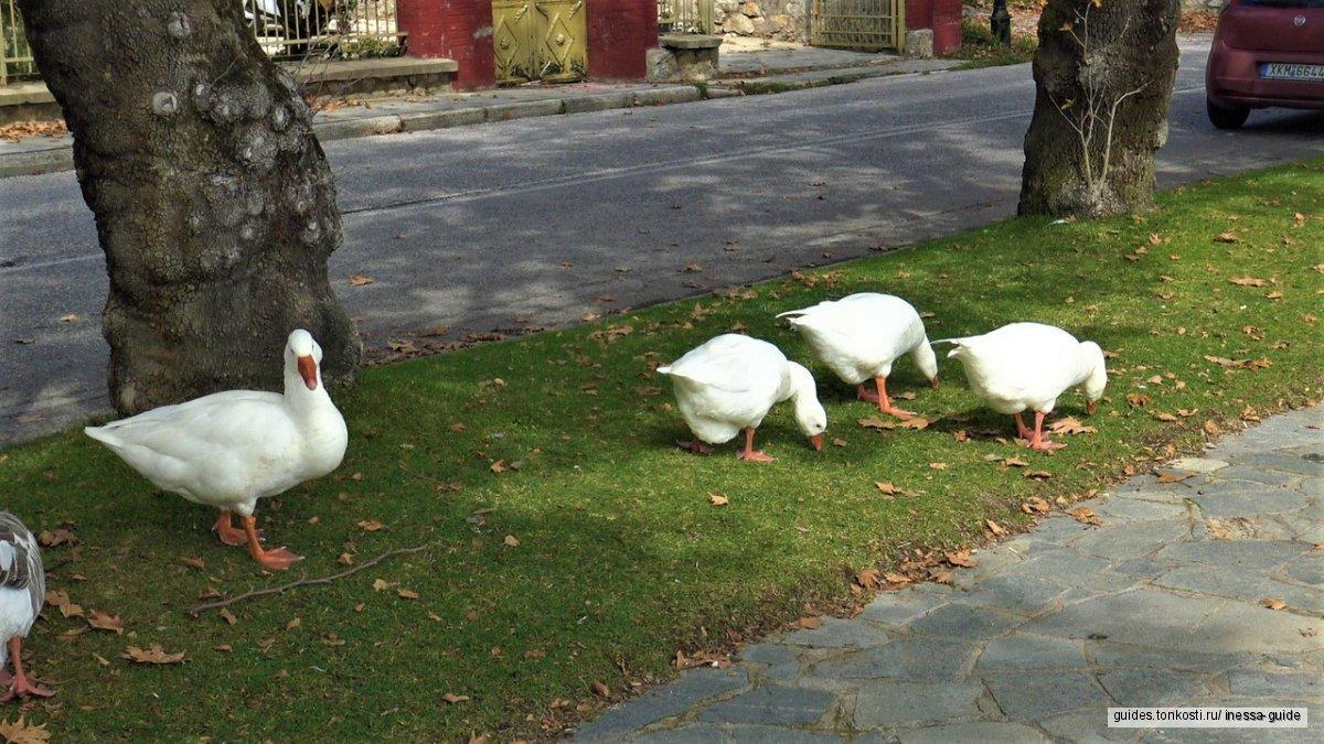 Касторья — в гостях у сказки! Гуси-лебеди, императоры, шикарные шубы и древнейшая рукопись в мире