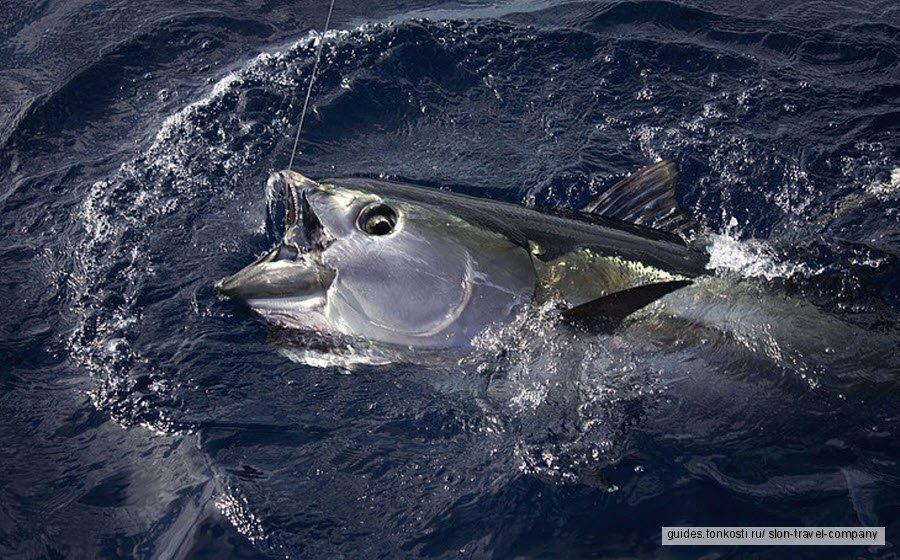Групповая морская рыбалка на Пхукете. Сезон 2019-2020