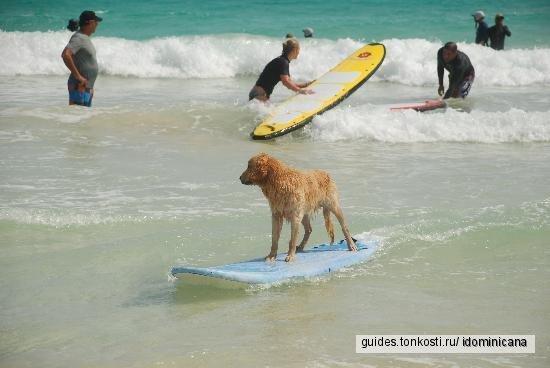Серфинг в Доминикане — от 99 USD