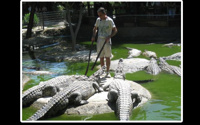 Экскурсия по Малаге и в парк крокодилов в Торремолиносе