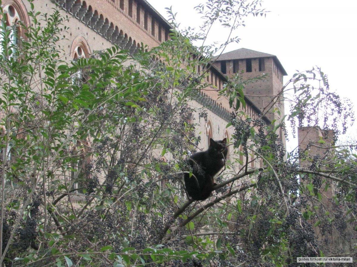 Павия — столица древних королей у ворот Милана