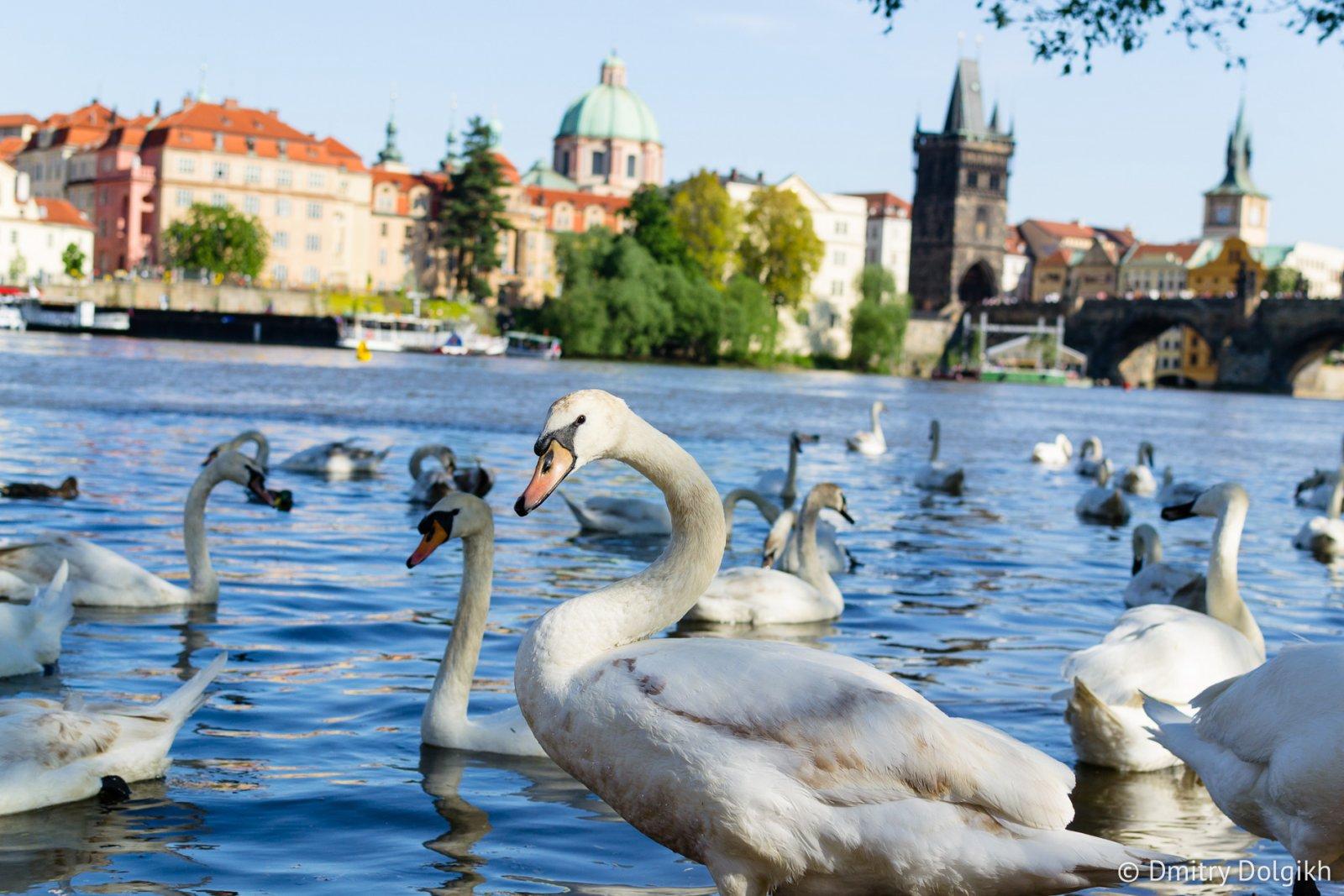 Королевский путь по Праге
