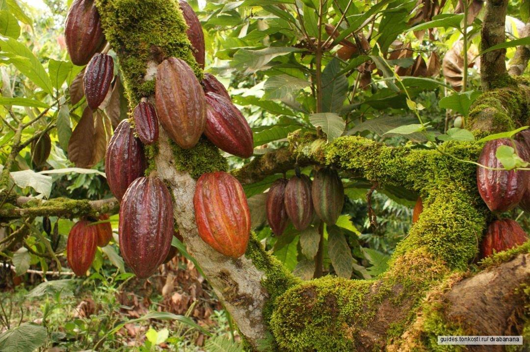 Фототур Банановый Рай