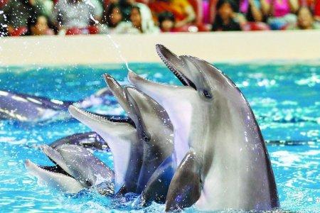 Билеты в дельфинарий Дубай