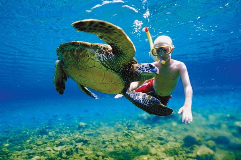 Портовый город майя Тулум + плавание с морскими черепахами