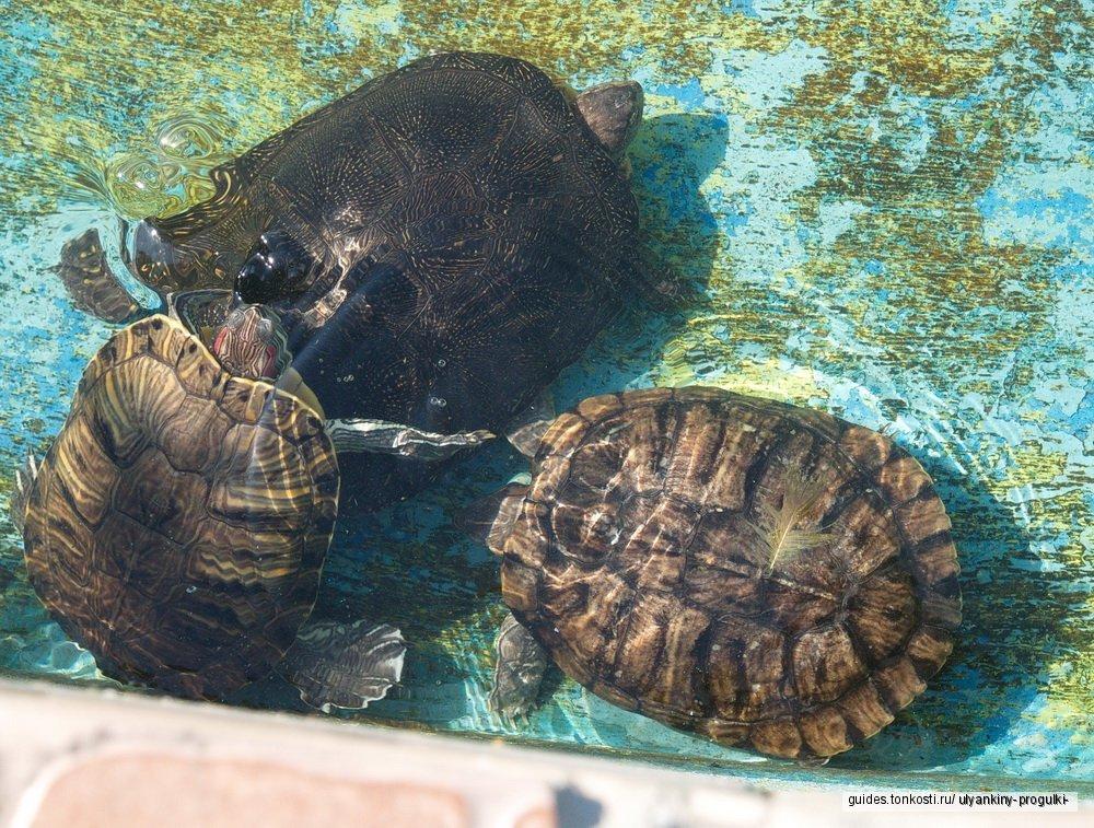 Экскурсия в зоопарк. Кормление черепах.