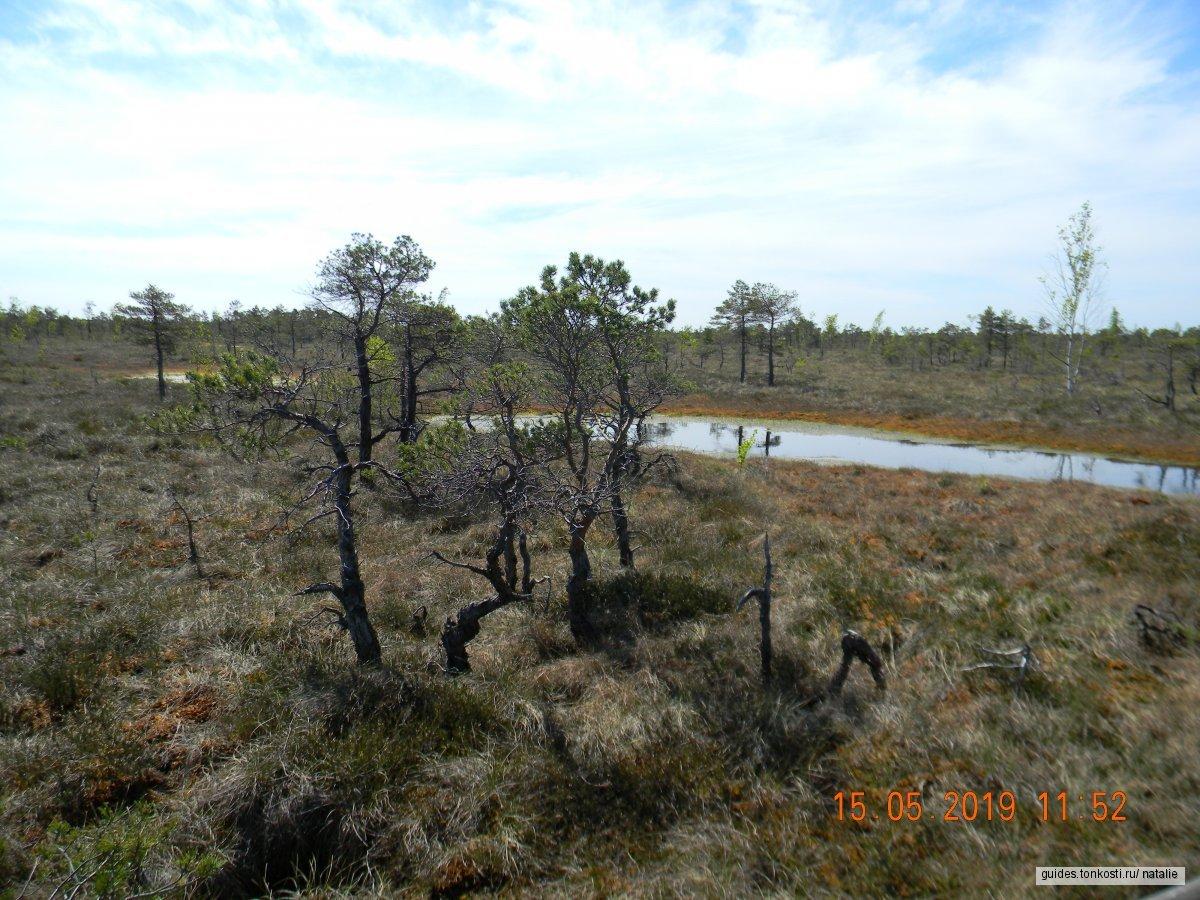 Национальный парк Кемери. Мир болот