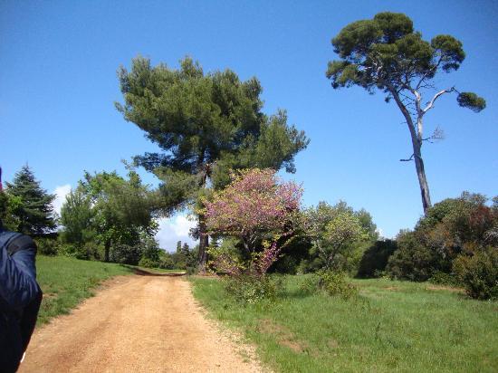 Ницца — дегустация вина на Лазурном Берегу Франции