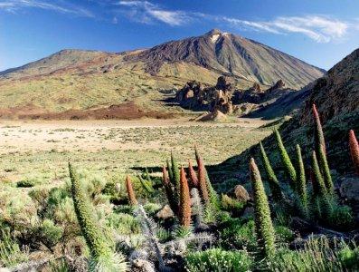 Национальный парк Тейде + Лоро-парк (Teide + Loro parque) (входной билет включён)