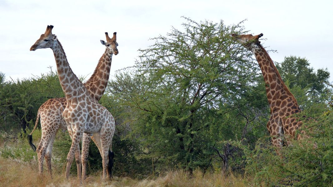 Сафари в районе Кейптауна