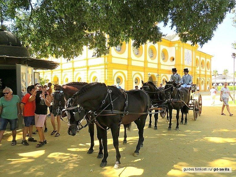Херес-де-ла-Фронтера — уникальные вина, фламенко и андалузские лошади