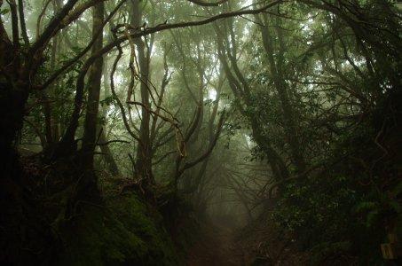 Реликтовый лес и немного истории
