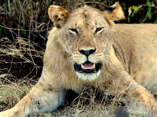 Сафари-тур в Кению «Удивительная Кения»