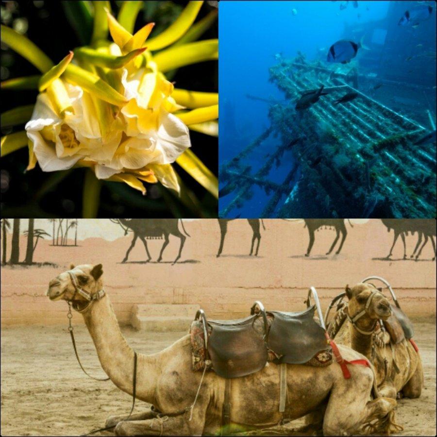 Экзотика Кипра на берегу и в море
