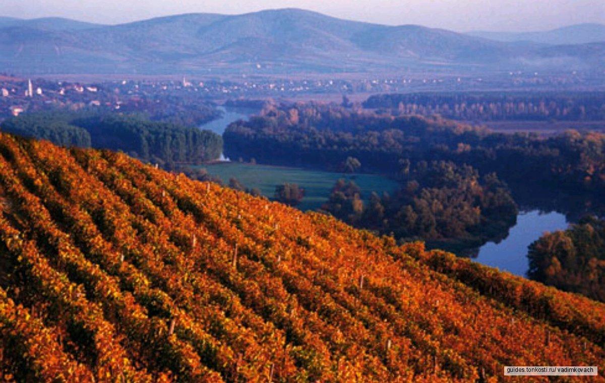 Токай — родина любимого вина Петра Первого (с дегустацией вин в знаменитых Царских винных подвалах)
