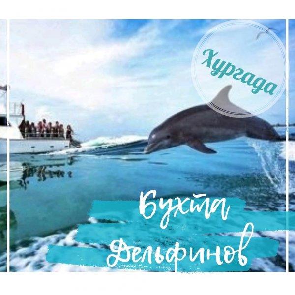 Бухта (дом) дельфинов из Хургады