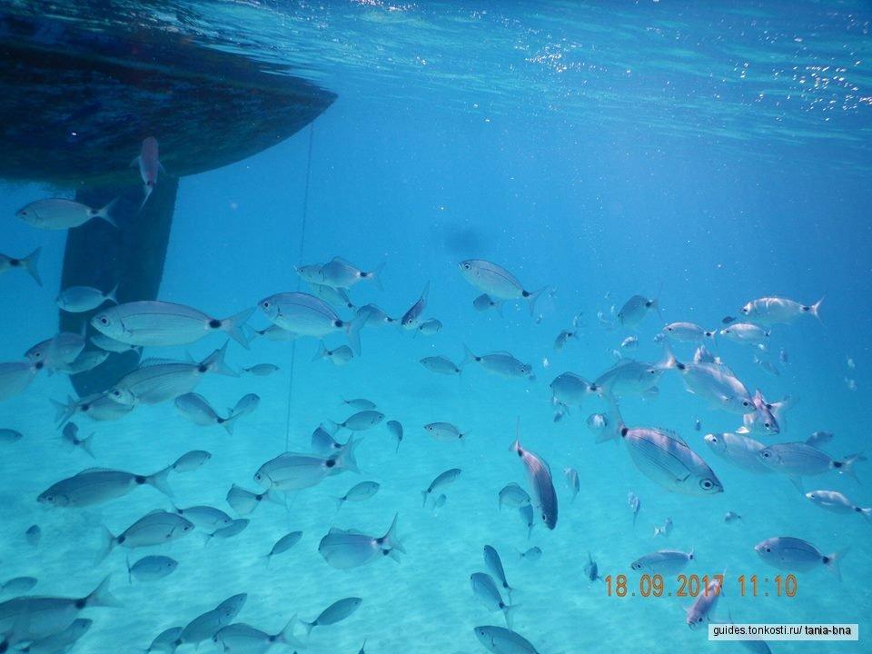 Эксклюзивный мини-круиз на парусной яхте по Сардинии