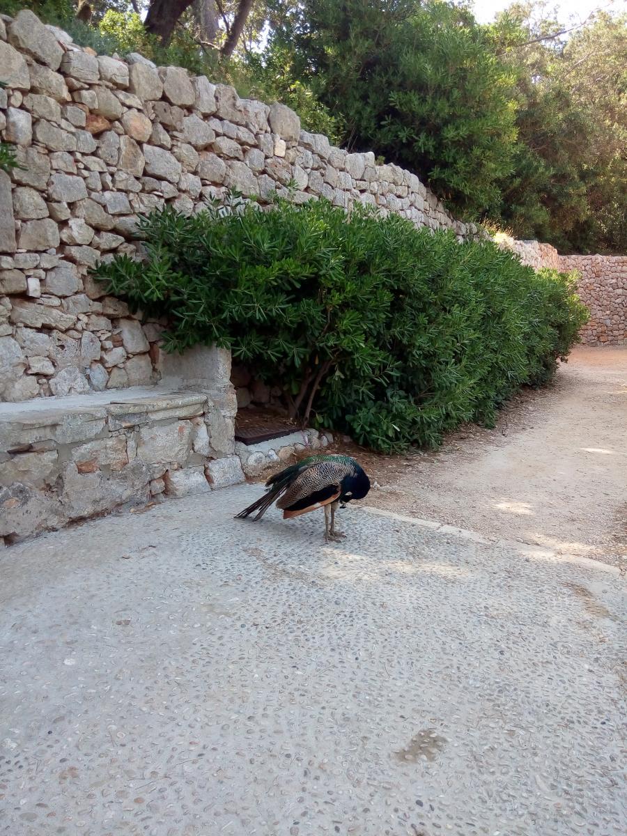 Из Дубровника на остров Локрум