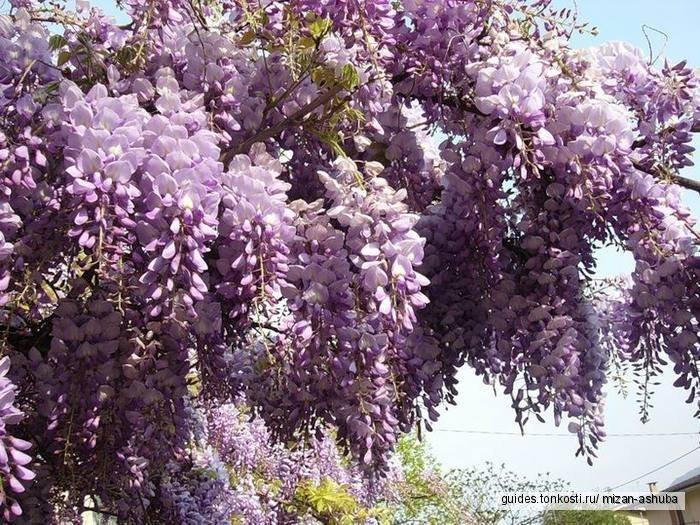 Медовые майские в стране души — Абхазии