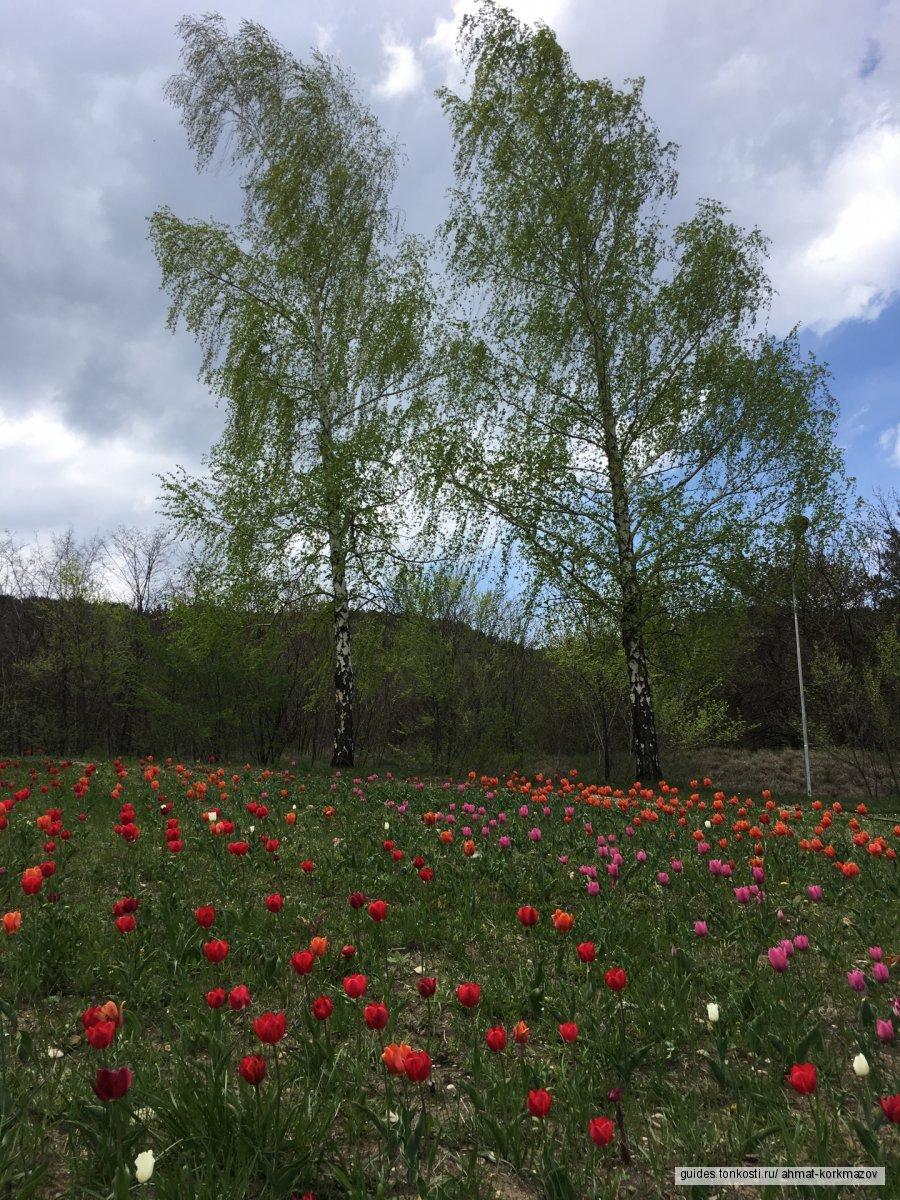 Окрестности Кисловодска. День добрых впечатлений