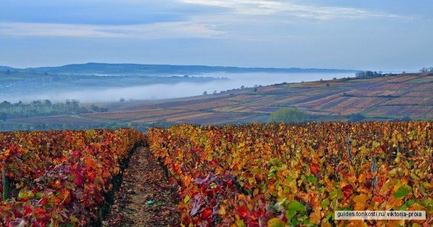 Винный тур в Бургундию