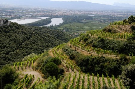 Экскурсия по винным погребам Cote du Rhone и Chateauneuf-du-Pape