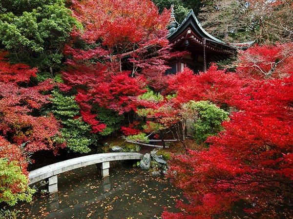 Осенние листья Японии