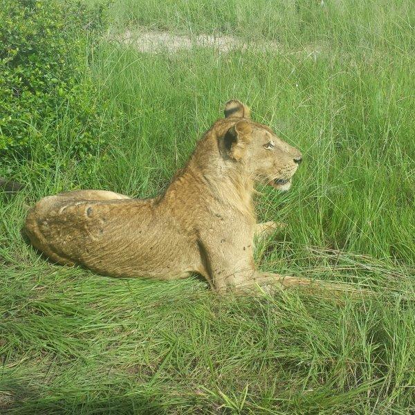 Сафари в Парк Микуми из Занзибара на 3 дня 2 ночи