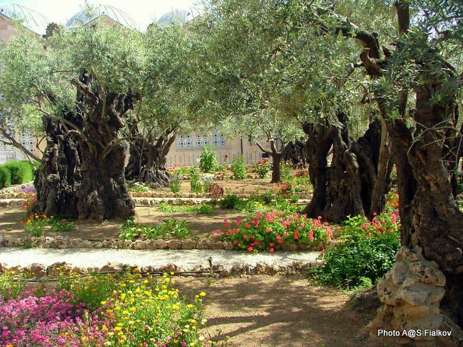 Небесный Иерусалим — сердце трех религий. Обзорная экскурсия