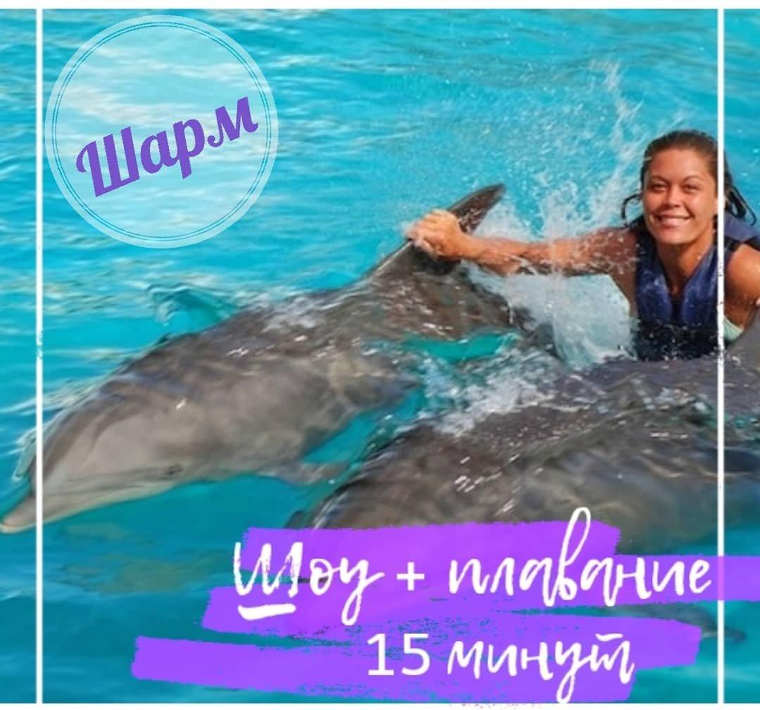 Шоу и плавание с дельфинами (15 мин) в Шарм-эль-Шейхе