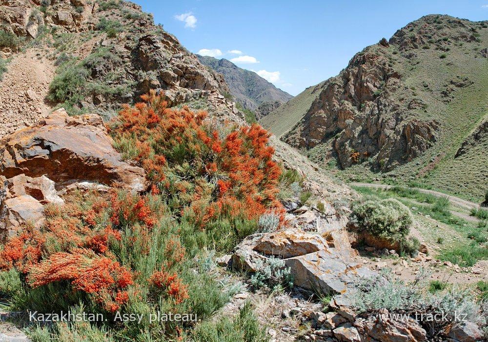 Джип-тур. Горное плато Ассы — Тургеньское ущелье — степные горы Торайгыр