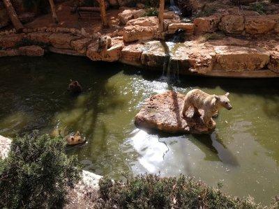 Поездка в парк Сафари из Тель-Авива и Иерусалима