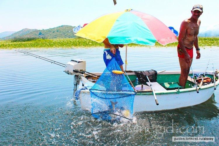 В гости к розовым пеликанам на Скадарское озеро