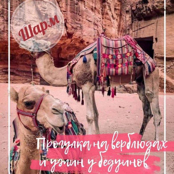 Прогулка на верблюдах и ужин у бедуинов в Шарме