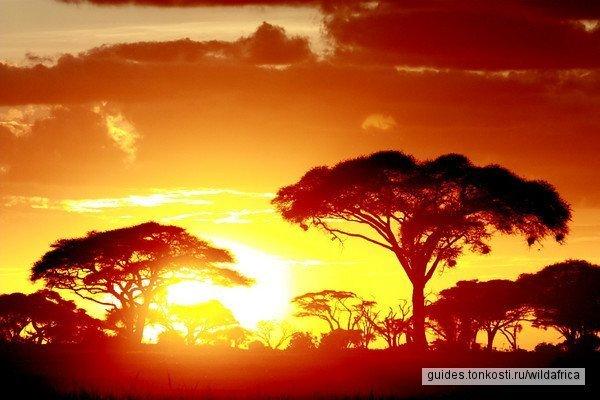 от Найроби до Момбасы, или наоборот