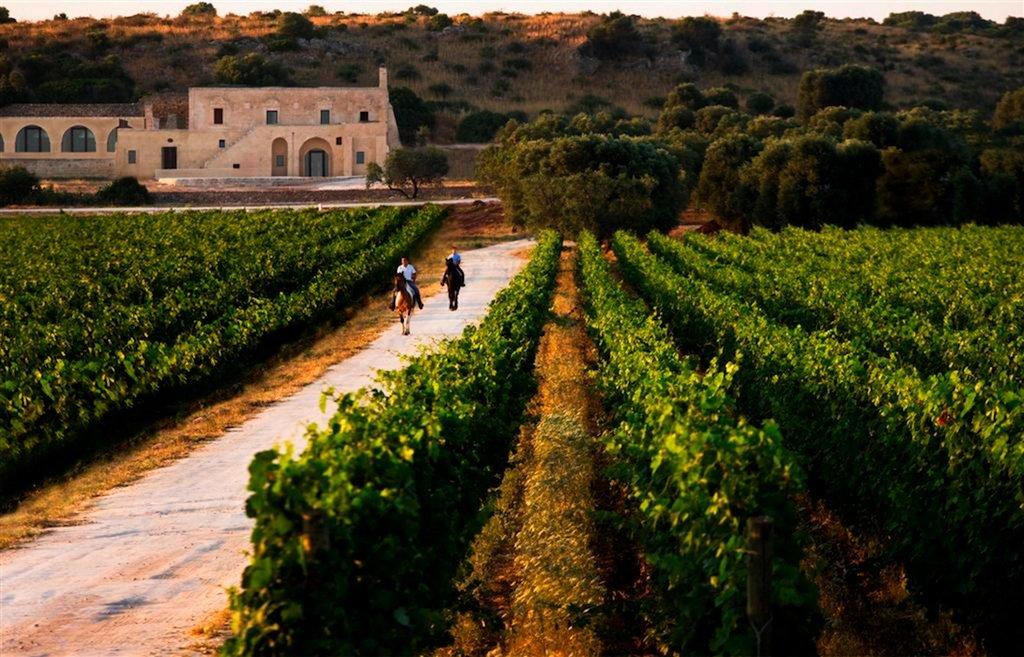 Посещение лучших виноделен Апулии