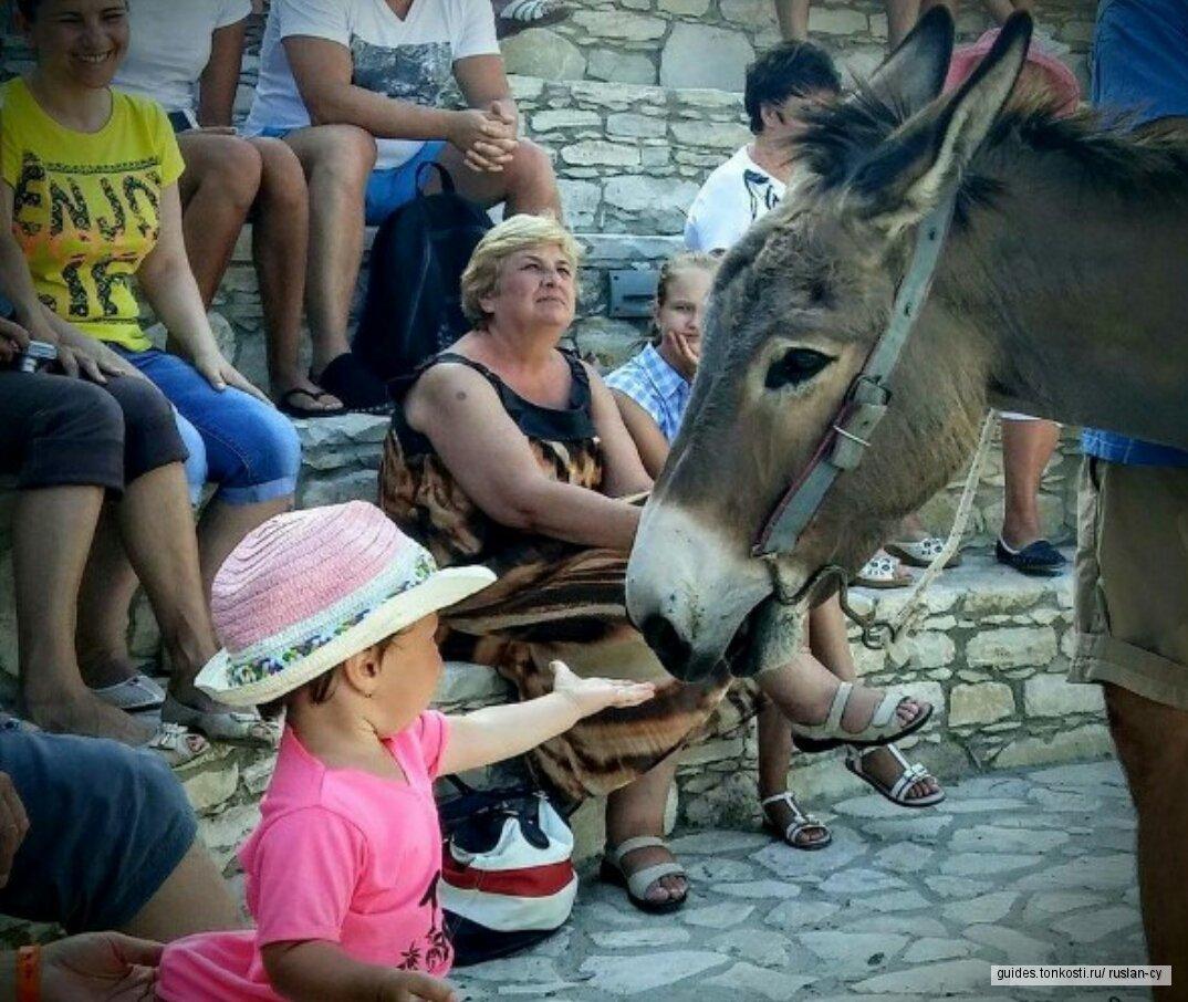 Детская экскурсия - Сафари на Осликах.