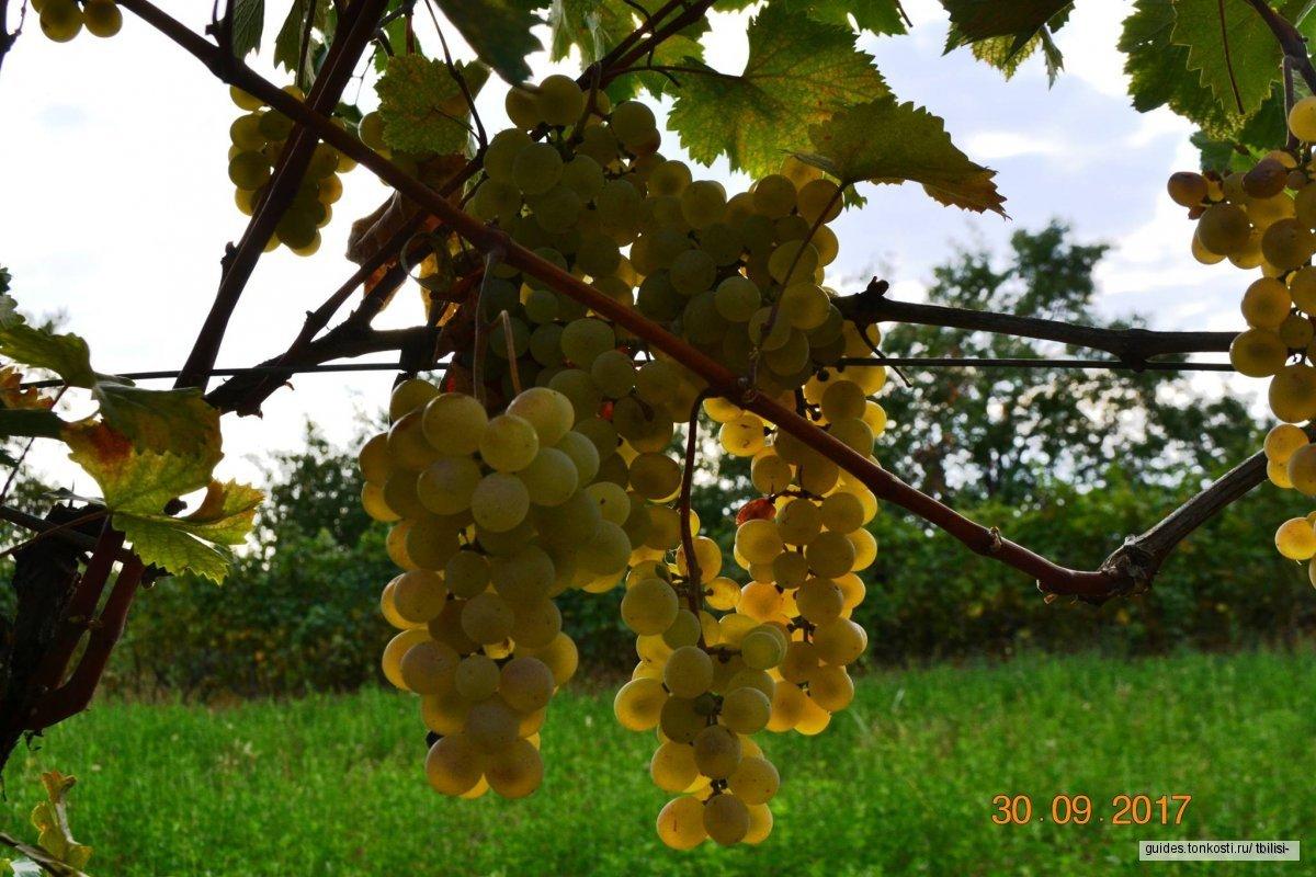 Город любви Сигнахи или винный тур в Кахетию?