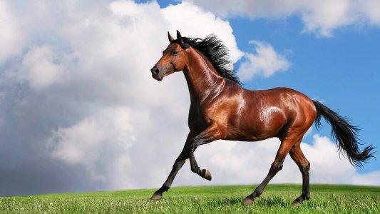 Три дня пешком, на машине, на лошадях
