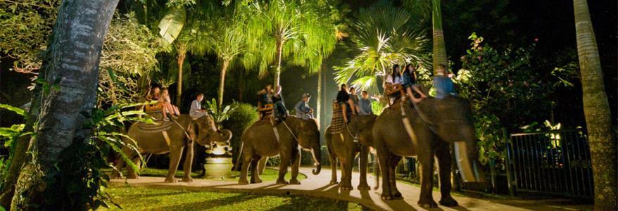 Сафари под звездами на слонах