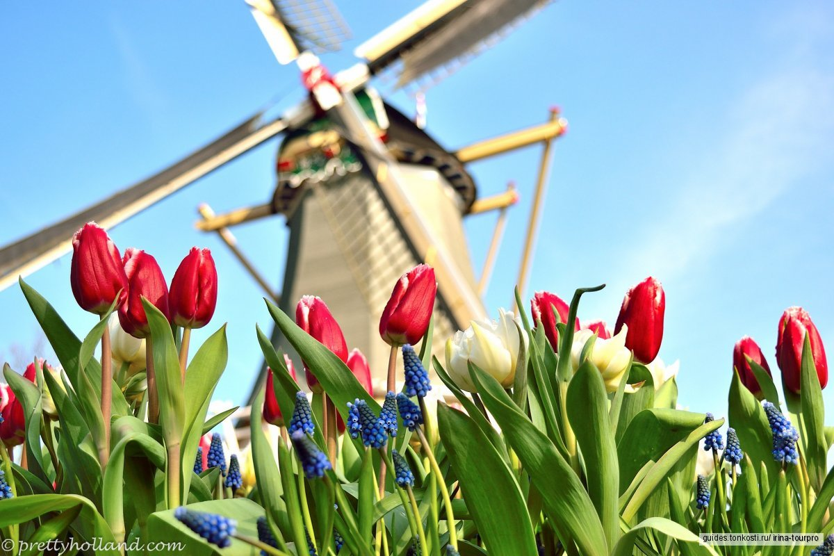 Парк цветов Кекенхоф (март — май)