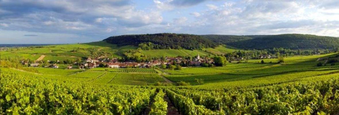Винно-гастрономический тур по Франции