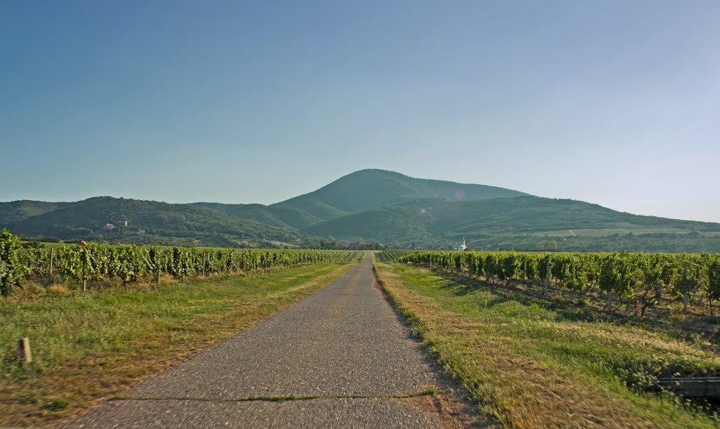 Вршац — виноградарский район!