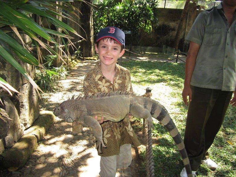 Животные Бали