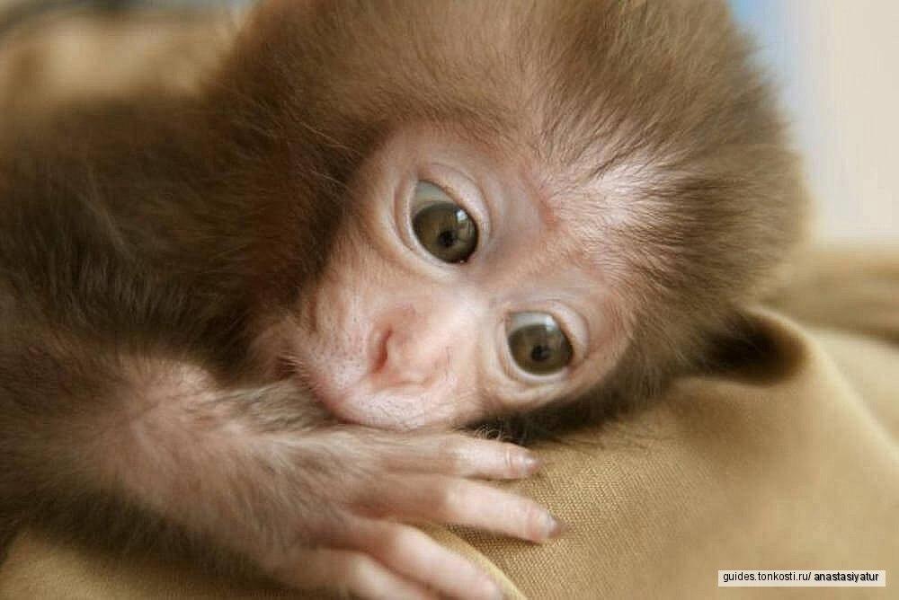 Город мудрых обезьян: обезьяний питомник в Адлере