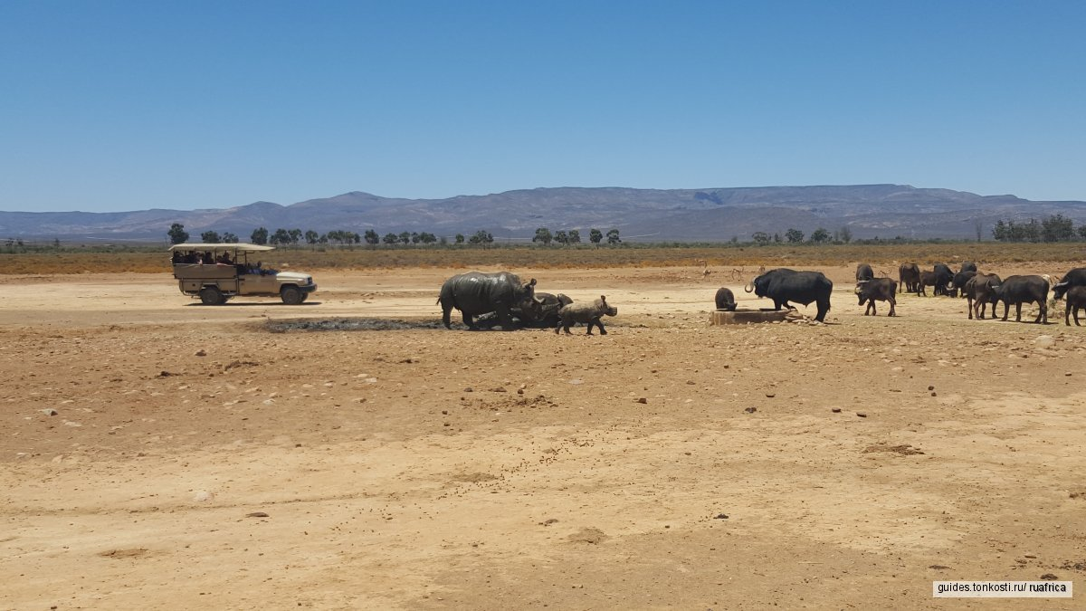 Сафари в Кейптауне
